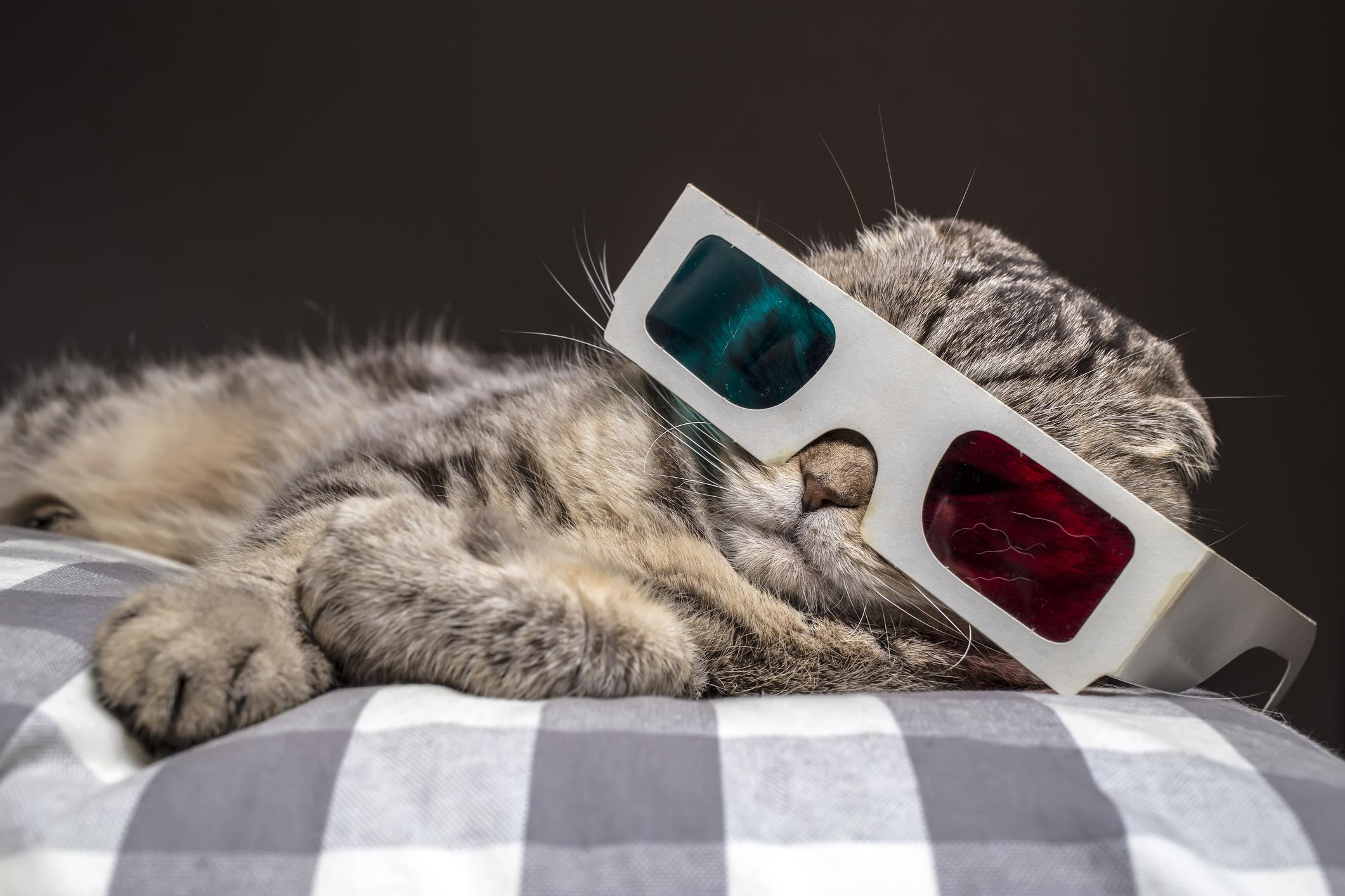 Funny Cat Closler Closler