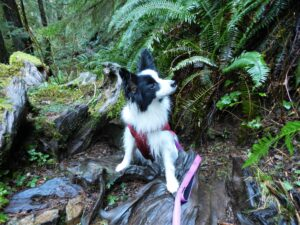 Hiking in the Quinault rain forest!