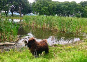 dog by pond